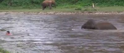 Video: This person was swimming in the river, so the elephant's baby landed in the water and...