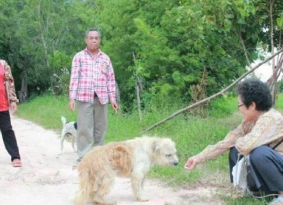 4 साल से एक ही जगह पर मालिक का इंतज़ार करता रहा कुत्ता, ऐसे हुआ भावुक मिलन