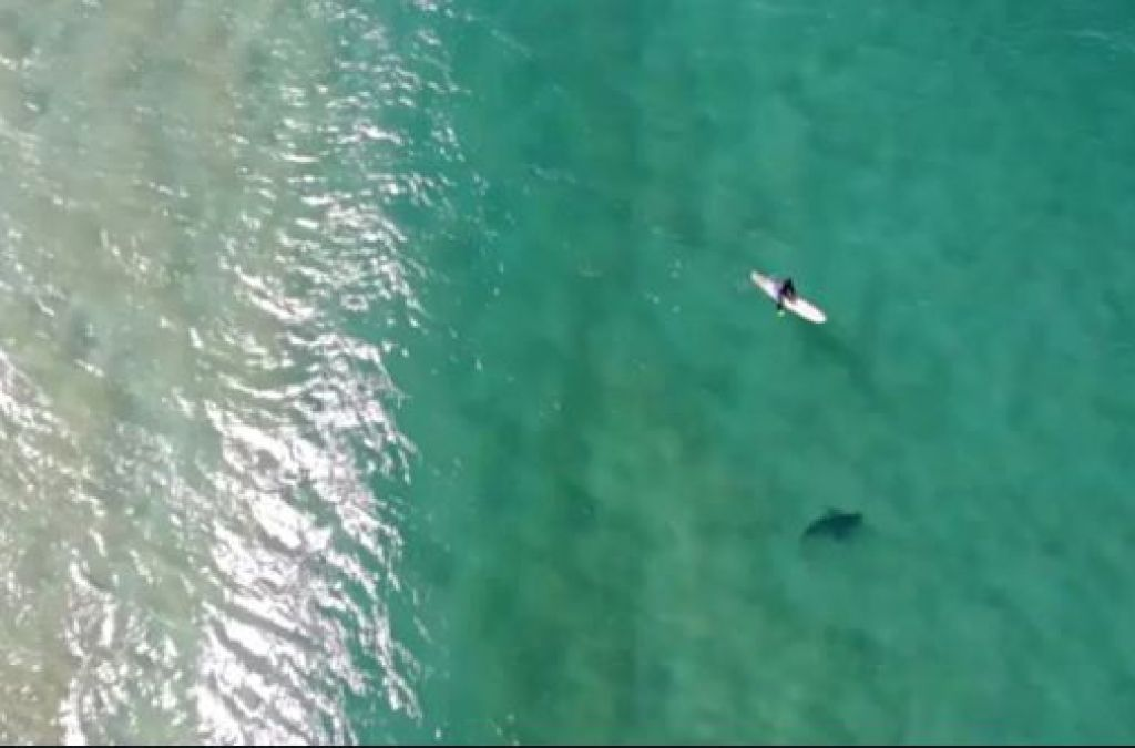 Video: This person was chilling in the water, the shark came and...