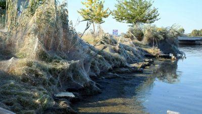 इन मकड़ियों ने मचाया आतंक, जालों से ढंक दिया पूरा शहर