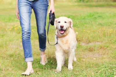 New rule: Pet owners failing to walk their dogs daily will have to pay 1.91 lakh fine