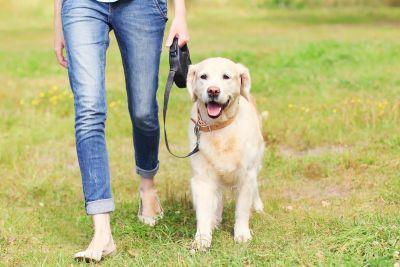 नया नियम : अगर अपने कुत्ते को रोज नही घुमाया गार्डन तो, भरना पड़ेगा 1.91 लाख का जुर्माना