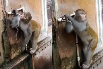 Monkey Amazes All by Closing Tap After Drinking Water, Tik Tok Video Viral