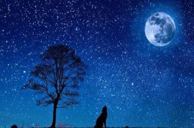 If there was no moon, then how would the world be? Know interesting and surprising facts!