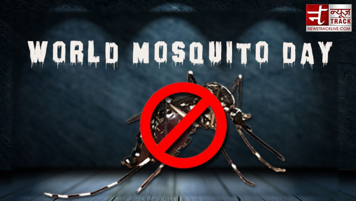 World Mosquito Day: A Mosquito Can Kill Man d, here Are Miraculous