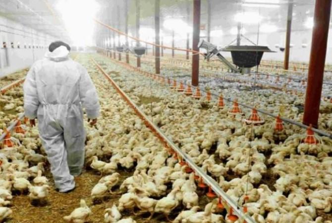 कोरोना के बीच इस देश में शुरू हुआ बर्ड फ्लू का कहर, मारी जाएंगी 18 लाख से अधिक मुर्गियां