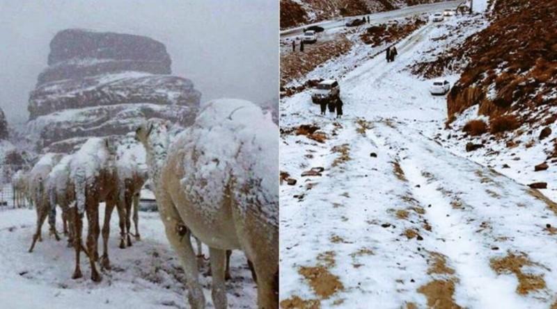 रेगिस्तान में बर्फ, सऊदी अरब में टूटा 50 साल का रिकॉर्ड, ऊंटों की पीठ पर जमी सफ़ेद चादर
