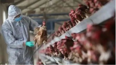 Another deadly virus found in China, first case of H10N3 bird flu registered