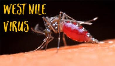 This dangerous virus is flourishing after Corona