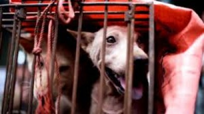 Dog meat festival starts in China after bats