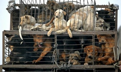 Dog meat will not be eaten in China anymore after coronavirus pandemic